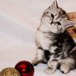 Как правильно ухаживать за котёнком